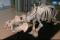 Szkielet hipopotama na Wydziale Biologii UG