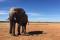 Słoń na pustyni Fot. Małgorzata Zimnoch